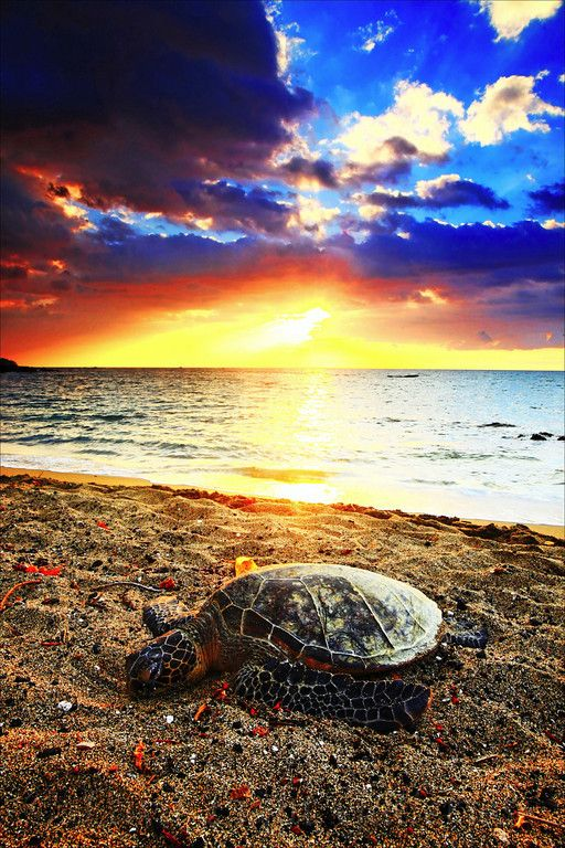 Sunset Marine life Nick Selway. #Turtle #Sunset