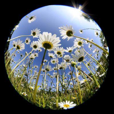 17 best ideas about fisheye lens on pinterest for Fish eye lense