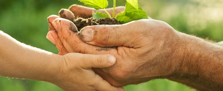 Agevolazioni fiscali per gli imprenditori agricoli