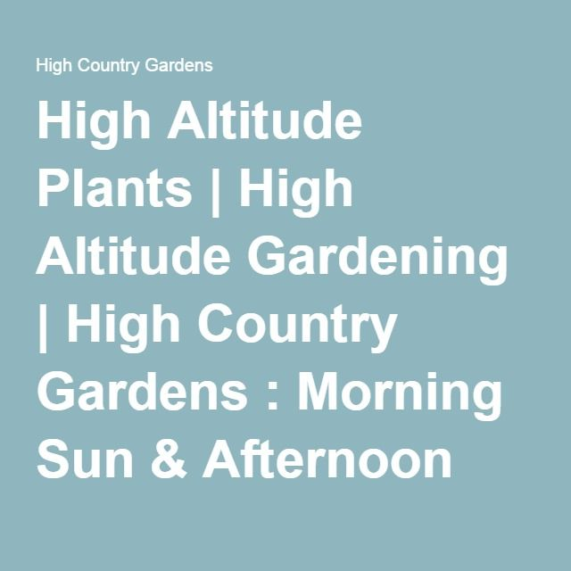 High Altitude Plants | High Altitude Gardening | High Country Gardens :  Morning Sun U0026 Afternoon