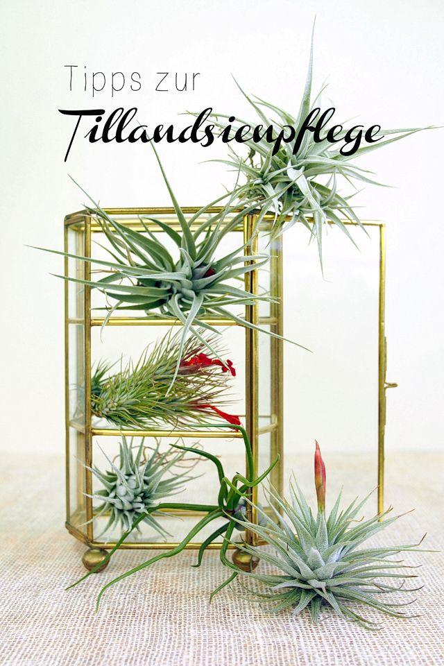 Die 25+ Besten Ideen Zu Sukkulenten Pflege Auf Pinterest ... Pflegetipps Hangende Zimmerpflanzen Raume Einfach Begrunen