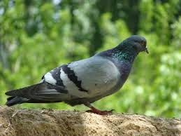 These are very much effective and discourage the #pigeons from landing. http://pigeonrepellent.blogspot.in/2014/09/types-of-pigeon-repellant-devices-in.html