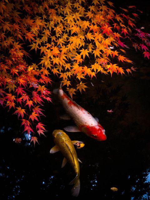 Autumn JAPAN*