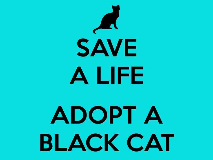 #monday#mondaymood#blackcat#adoptacat#todaysmood#citycampus#citycampusgr