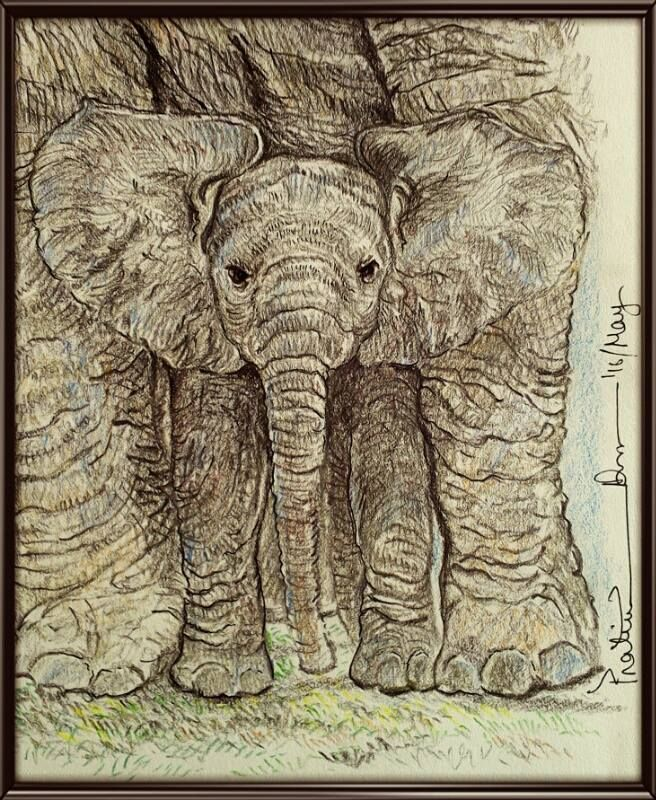 "Sunday Special....I am Under the Safest roof of the World. But We are also facing Threats of ""......""... Coloured Pencil on paper... 8*8 inch ... 2016... Habitat loss is one of the key threats facing elephants. Many climate change projections indicate that key portions of elephants' habitat will become significantly hotter and drier, resulting in poorer foraging conditions and threatening calf survival. Increasing conflict with human populations taking over more and more elephant habitat and"