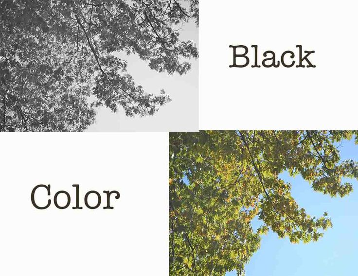 12 best images about black and white vs color on for White is all colors