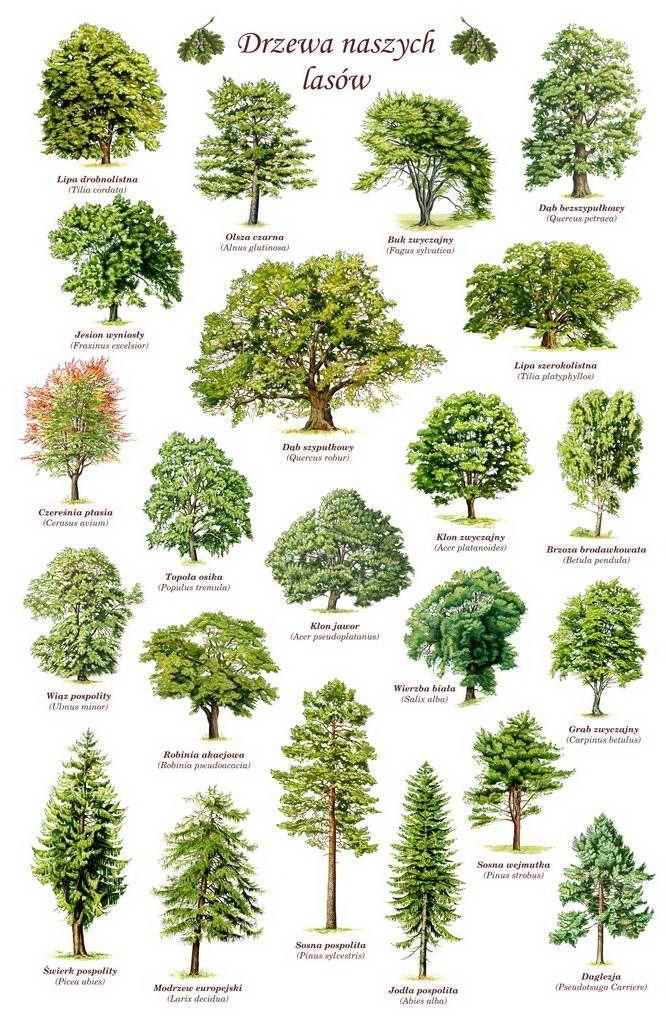 Laubbäume Bestimmen