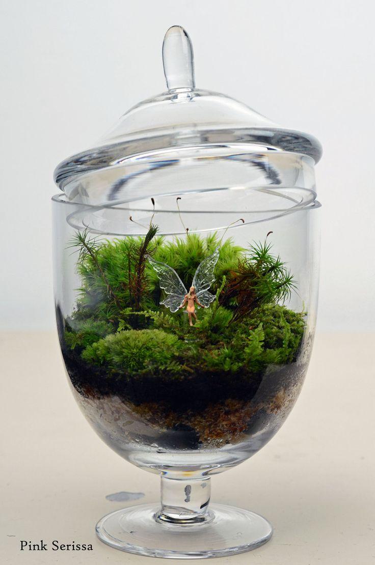 43 best images about my terrariums on pinterest miniature moss terrarium and glass terrarium. Black Bedroom Furniture Sets. Home Design Ideas