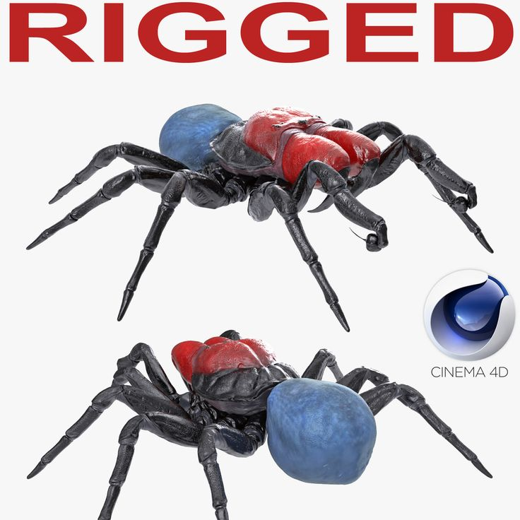 3D Mouse Spider Rigged for Cinema 4D