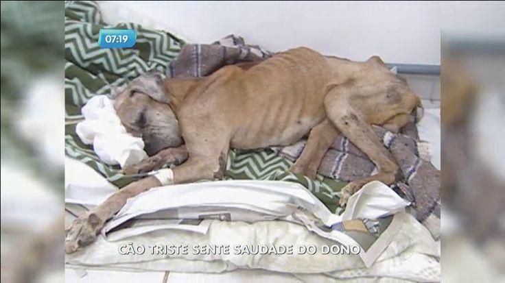 Cão para de comer e fica depressivo após morte do dono - Fotos - R7 Balanço Geral Manhã