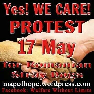 Please share!   #RomaniaDogKillers #stopanimalabuseinromania #Romania