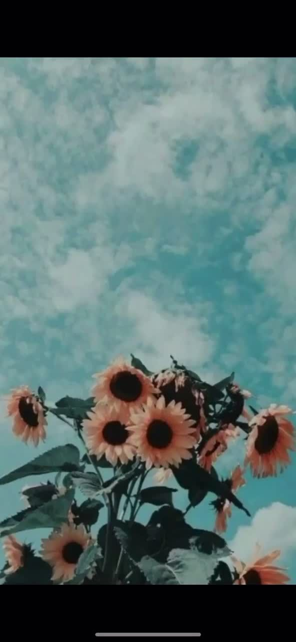 Tom Holland Tom Holland On Tiktok Save And Have It For A Live Backroad Sunflower Wallpaper Flower Iphone Wallpaper Aesthetic Iphone Wallpaper
