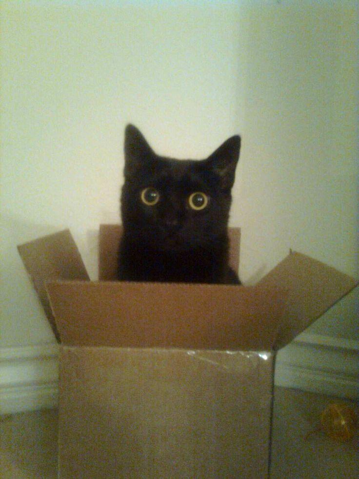 Bvca in a Box!!!