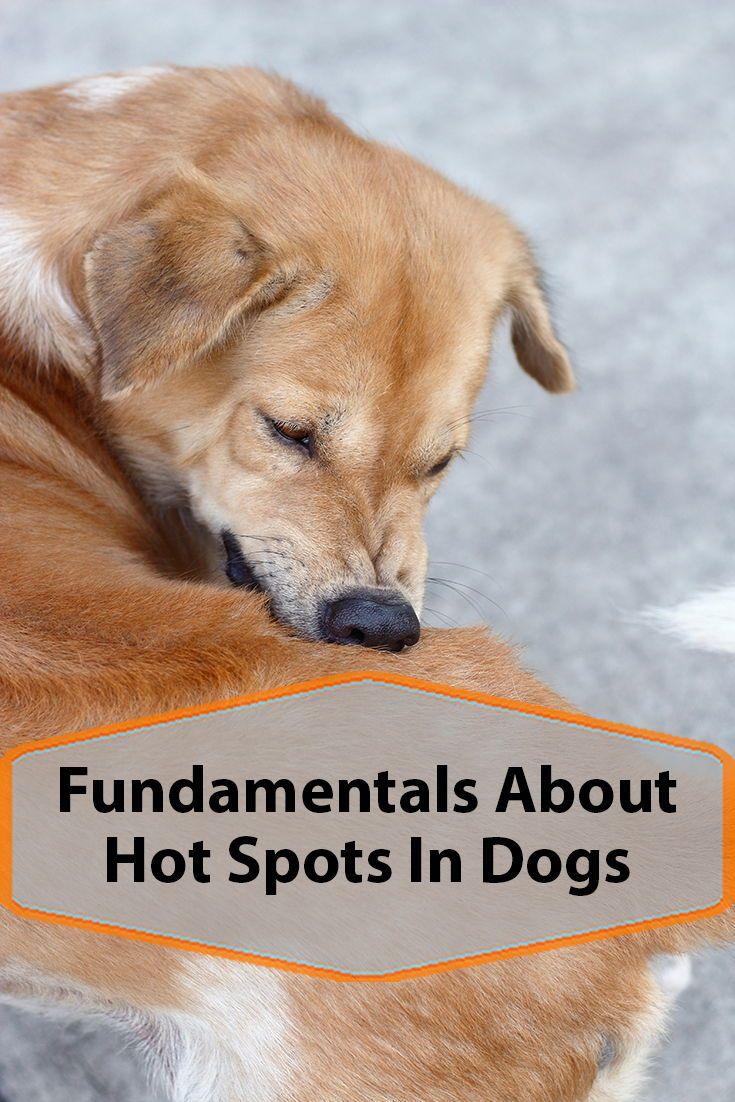 Hot Spots In Dogs Dog Hot Spots Hot Spot Dogs