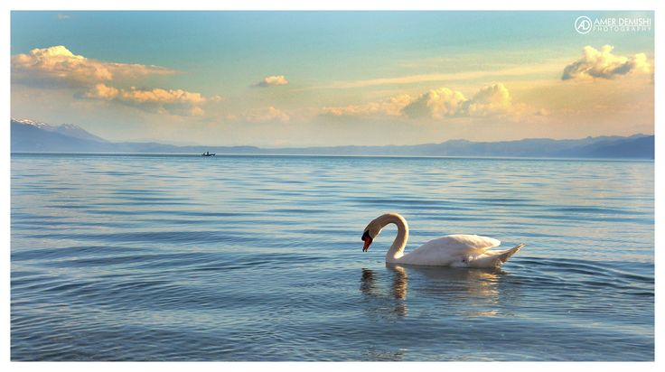 https://flic.kr/p/kx3gce | White Swan at Struga Lake