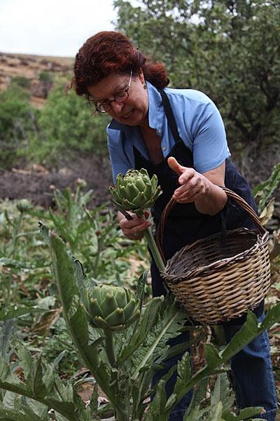 Aglaia Kremezi harvesting artichokes from her garden in Kea.
