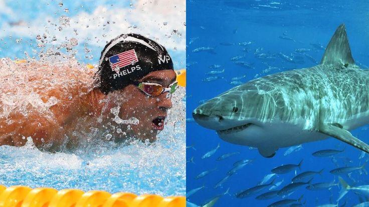 Пловец Майкл Фелпс посоревнуется с большой белой акулой (ВИДЕО) | Зона Ужасов