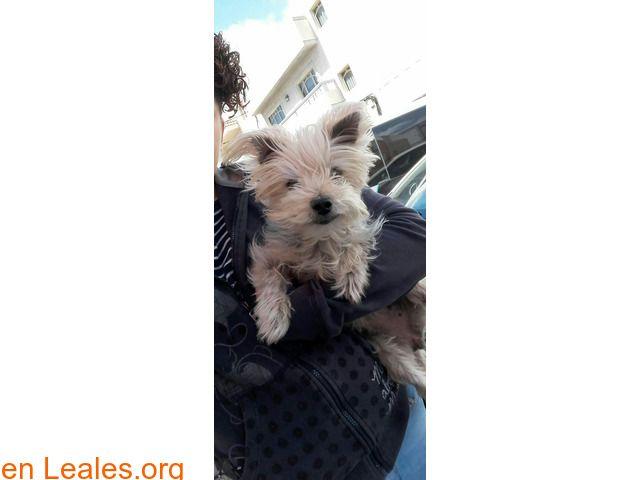Perros Ya En Casa España Las Palmas Gran Canaria Facebook
