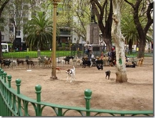 I love this company - Jim is AWESOME!!! PETSVENTURA PET RELOCATION SOLUTIONS: Off Leash Parks in Buenos Aires Argentina - via http://bit.ly/epinner