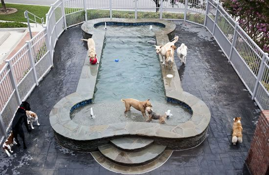 If I won the lottery, this would be in my backyard...neighborhood dog parties y'all!
