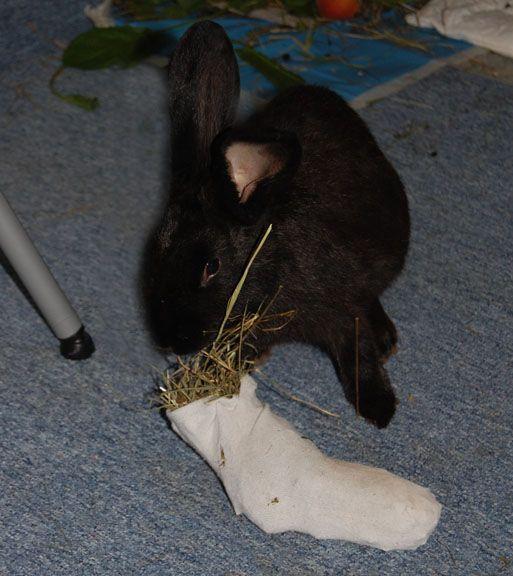 besch ftigung spielzeug kaninchen pinterest spielzeug kaninchen und hase. Black Bedroom Furniture Sets. Home Design Ideas