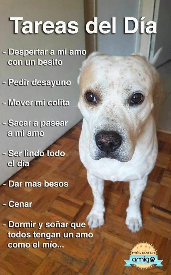 Ojala fuera asi Toda la información y productos especializados para el la raza perro maltés