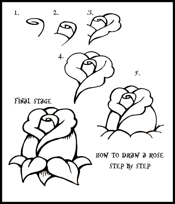 How To Draw flowers | Daryl Hobson Artwork: How To Draw A Rose: Step By Step Guide