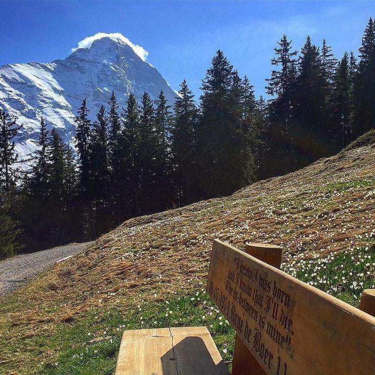 Back to one of my favorite places and in the best season of the year.  #secretspot #trail #mtb #bike #bench #break #alps #grindelwald #training #switzerland #beo #spring