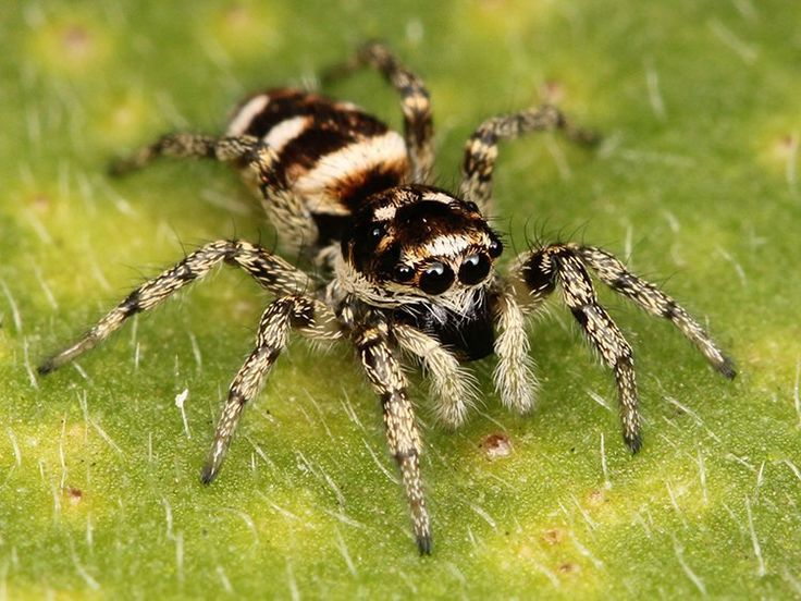 7 Home Remedies for Spider Bites | Effective and Easy Ways To Treat Spider Bites at Home by Survival Life at http://survivallife.com/7-home-remedies-for-spider-bites/