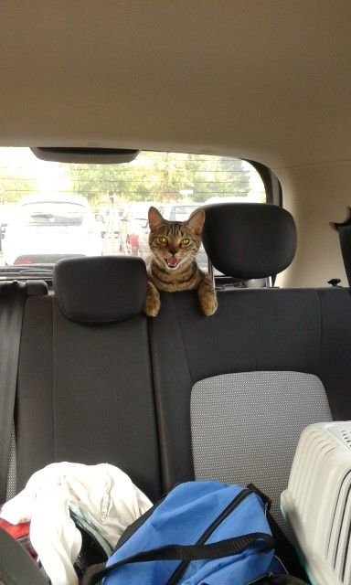 Ehi, where are we going?