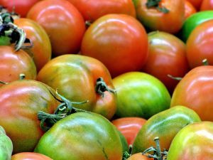 """By Heather Rhoades It can be a frustrating thing to have a tomato plant full of green tomatoes with no sign that they will ever turn red. Some people think that a green tomato is much like a pot of water. If you watch it, nothing seems to happen. So the question becomes """"Why do…"""
