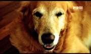 Pirei - Pirei - Cachorros | globo.tv