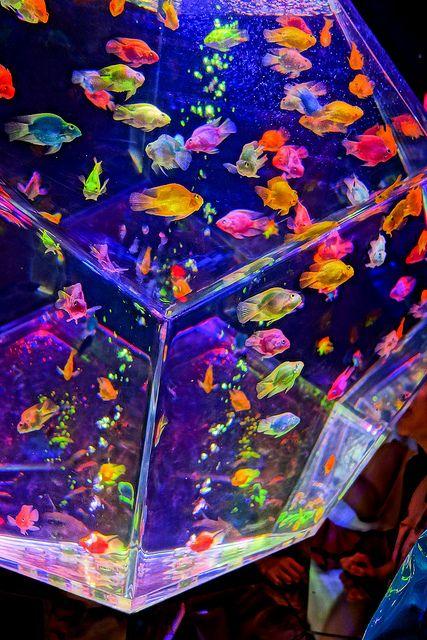 art aquarium 2012 by sugagaga, via Flickr