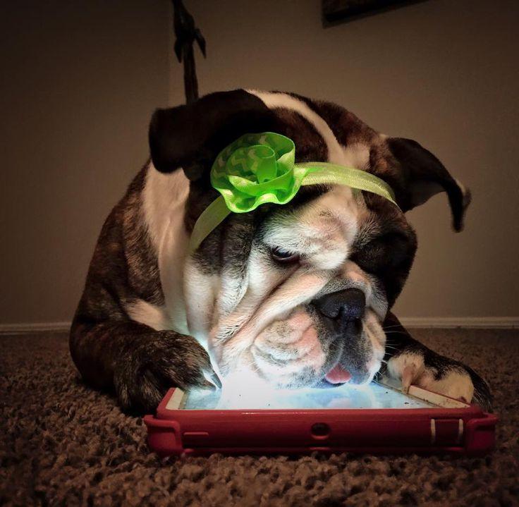https://www.facebook.com/bulldogkarma/?fref=photo