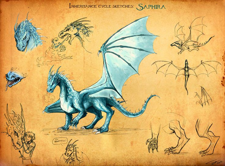 Saphira from the Inheritance Cycle by Chris Paolini 'Saphira sketches by *Ticcy on deviantART'