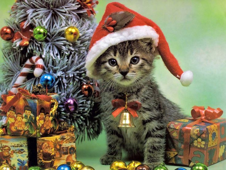 28 best Christmas Cats Wallpapers images on Pinterest | Christmas ...