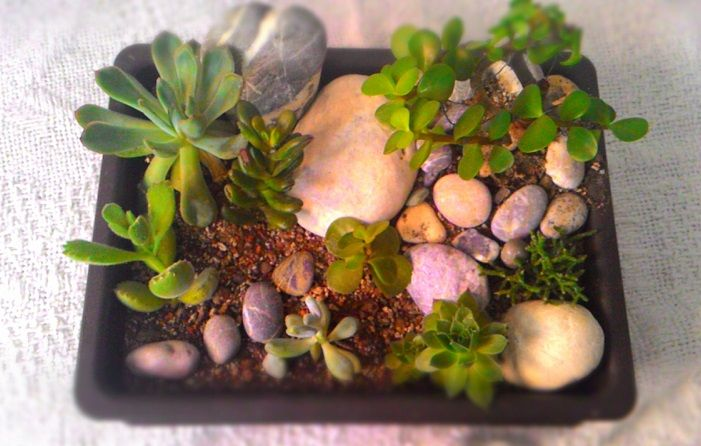 Succulent oasis with love