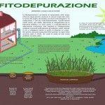 I fitodepuratori rappresentano un sistema di depurazione naturale delle acque reflue domestiche, agricole e industriali.