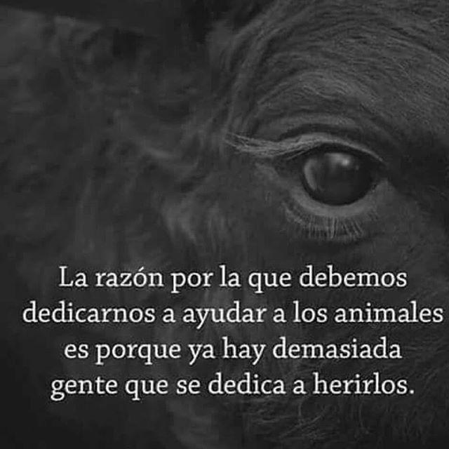 Leales.org ayudó en el 2017 a encontrar un hogar a más de 500 animales; De cualquier particular protectora o albergue. Cualquier ciudadano puede poner en adopción a su animalen vez de abandonarlo... NO LO ABANDONES SÚBELO A LEALES.ORG Y SALVA UNA VIDA  https://www.instagram.com/p/BgiQ4zeh5Ug/ https://scontent.cdninstagram.com/vp/1b118885f18f25ecf3c3affa17213c6b/5B3B97FD/t51.2885-15/s640x640/sh0.08/e35/28763173_1647606138650292_667076930092138496_n.jpg