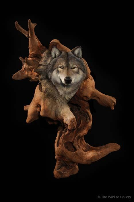 by Taxidermy Studio___The Wildlife Gallery Wholesale Fur Dressing and Custom…