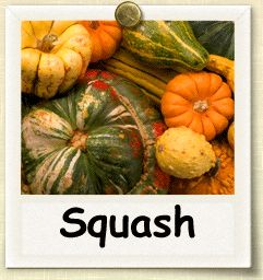 Growing Squash: Super good site on how to and when to grow all things.