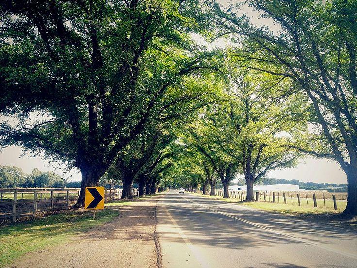 Bacchus marsh honors road