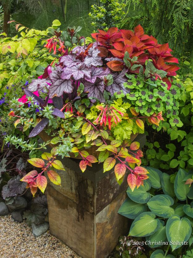 Container Garden Design, Packed Full Of Color, Short Pot On Pedestal,  Vibrant Color. Container FlowersGarden ContainerShade PlantsPotted ...