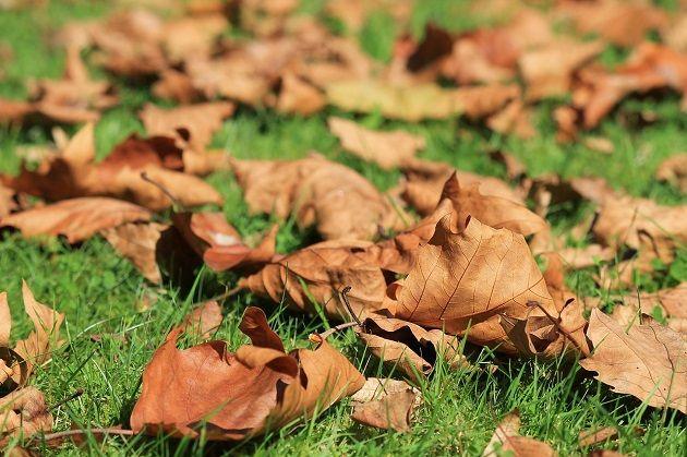 Leaf Mold, Leaf Compost, Leaf Mulch