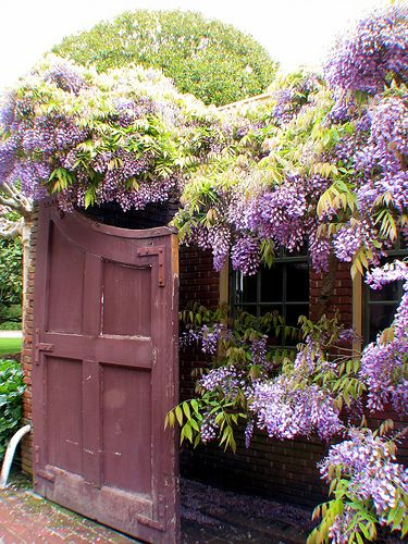 Garden Gate at Filoli Gardens - Wisteria was in full bloom. Filoli is 30 miles south of San Francisco.- Photo by Rosemary Bliss