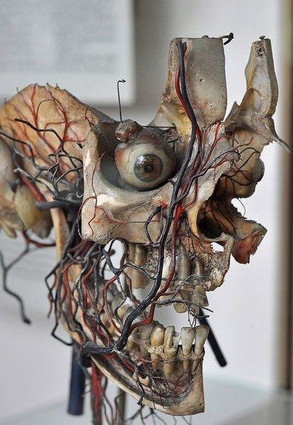 Veins and arteries.                                                       …