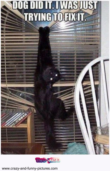 Funny Cat Pictures: The Dog Did It. Funny animal photos cat, dog cute images pictures for facebook sharing. funny animals pictures, Cat Pictures