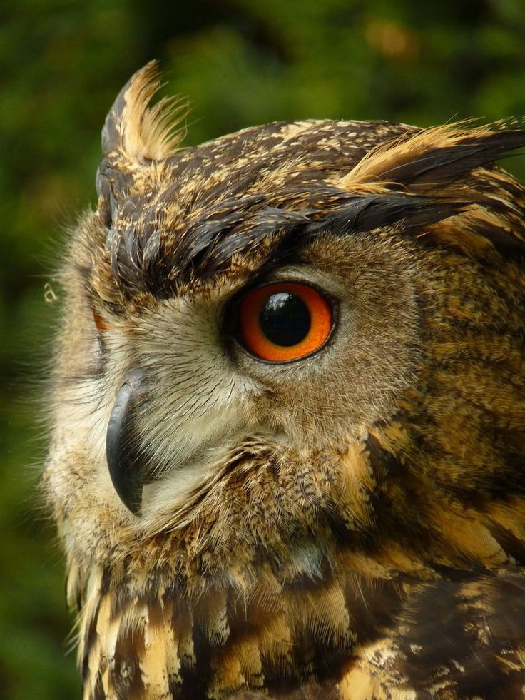 owl photography - Google Search