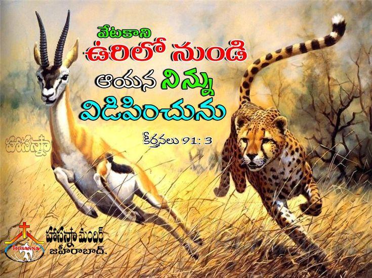 Pin by Jeevan on Telagu quotes Animals, Kangaroo