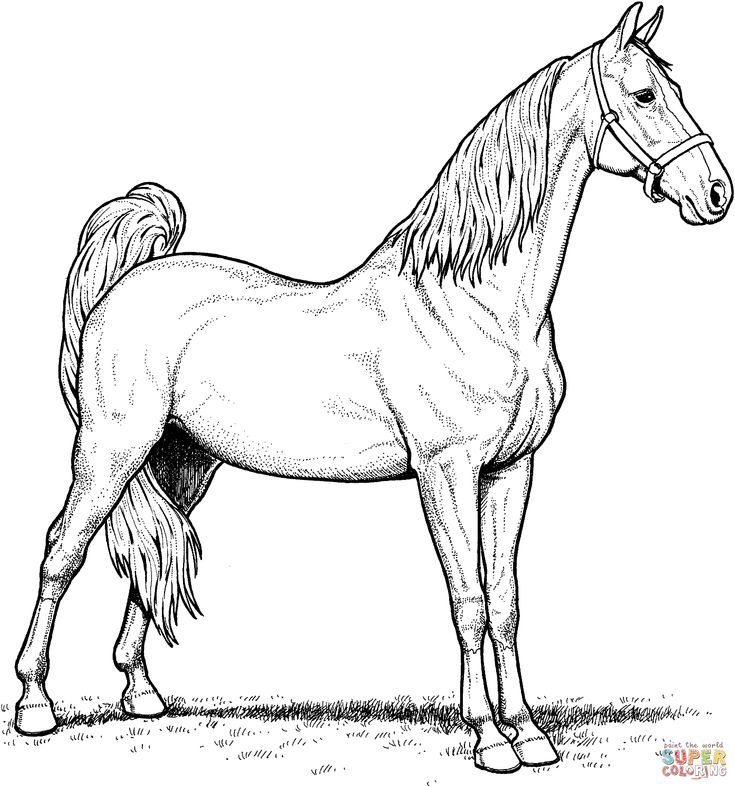 Coloring In Pages Horses : 58 best coloring pages images on pinterest